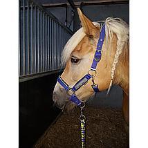 Harrys Horse Halsterset Just Ride