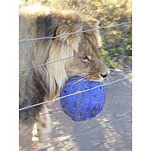 Jolly Ball Push-n-Play Blau