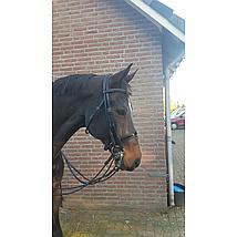 Harrys Horse Kinketting Beschermer Zwart