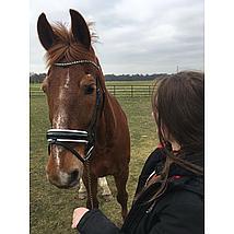 Harrys Horse Bridle Chique Black