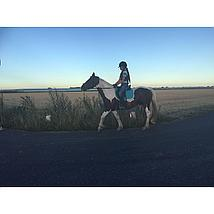 Harrys Horse Zadeldek Next Dressuur