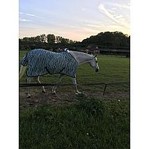 HH Fliegendecke Mesh Stdmassig Gurten Zebra