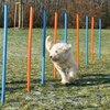 Agility Poles 12 Pcs