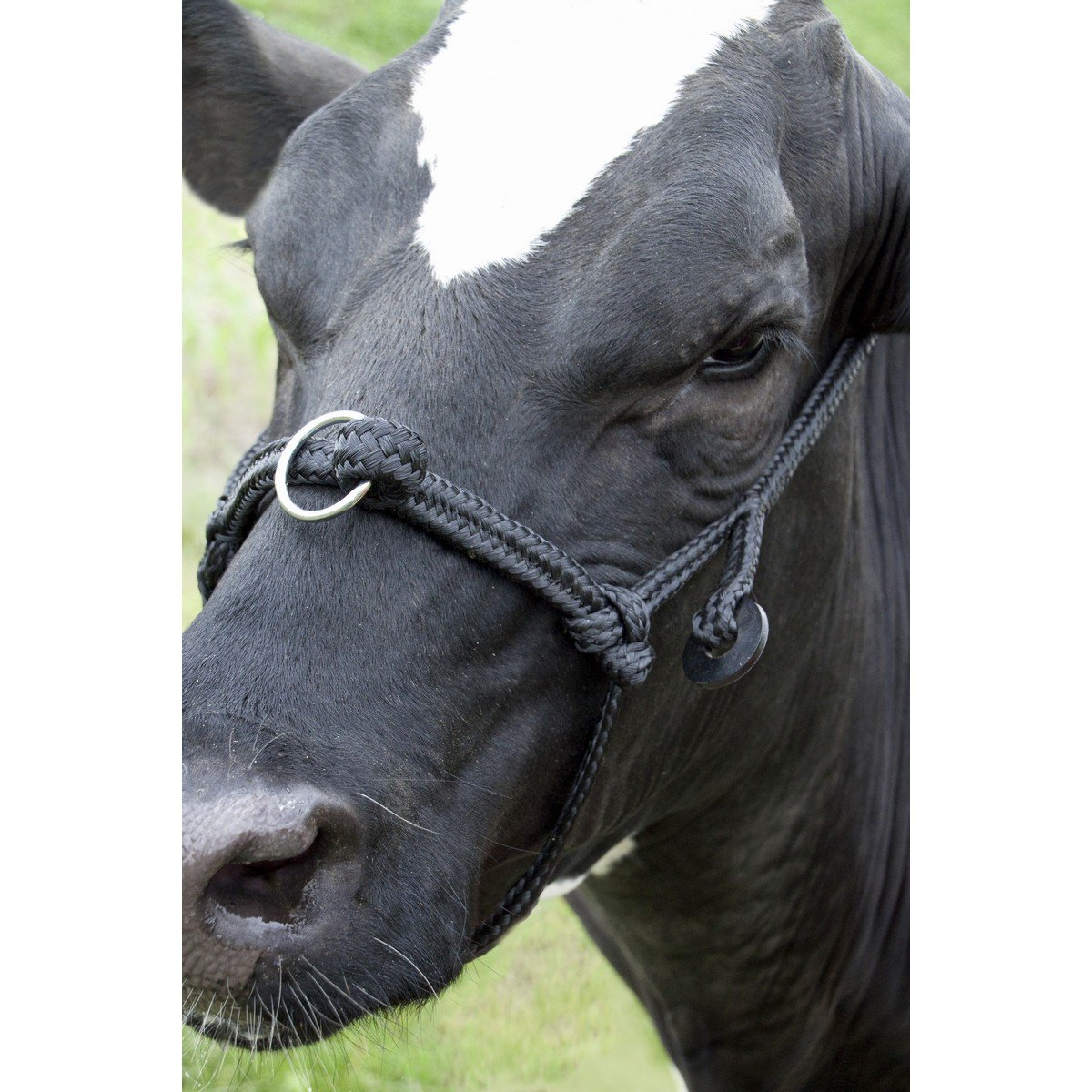 Imagem de Agradi Cow halter adjustable wide Black