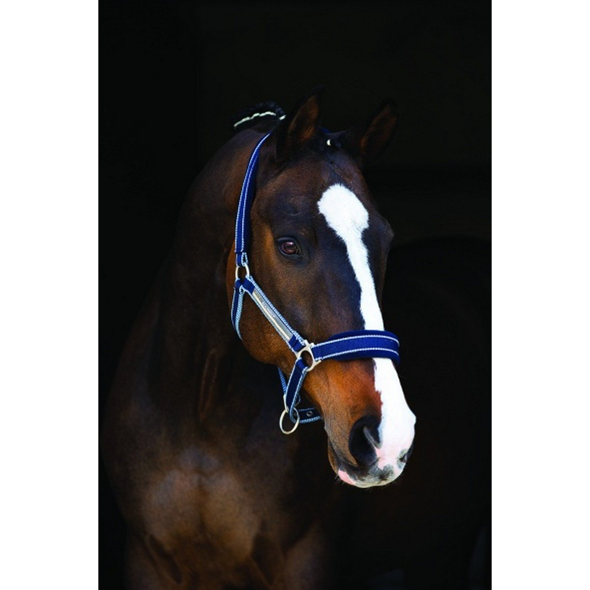 Afbeelding van Horseware Halster met Logo Whitney Stripes Navy Cob