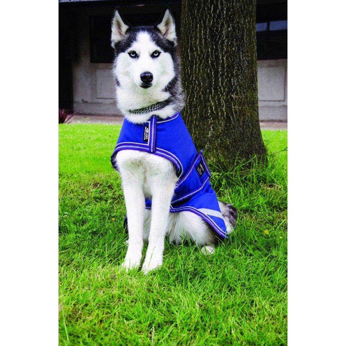 Imagem de Amigo by Horseware Dog Rug 100g Blue Small