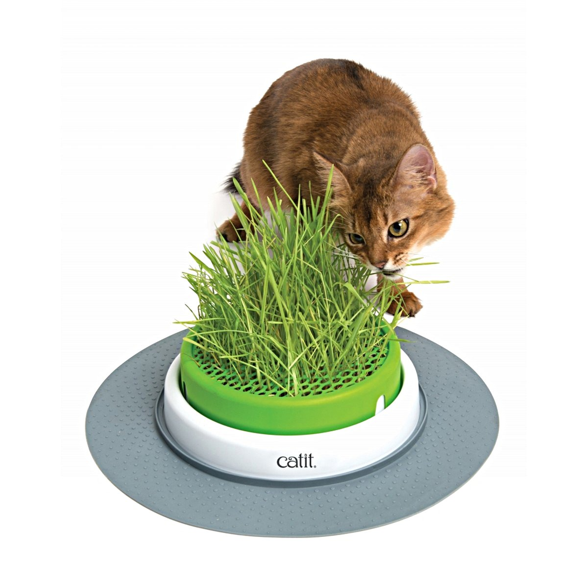 Afbeelding van Cat It Senses 2. Grass Planter