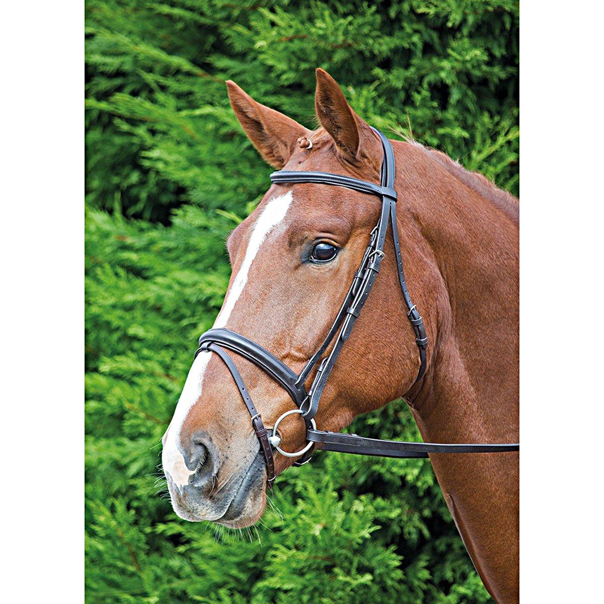 Imagem de Aviemore Bridle Comfort Fit Havana Pony