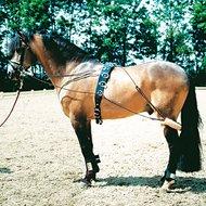 Harrys Horse Longeerhulpteugel