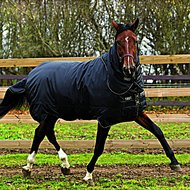 Horseware Trot Plus Heavy Black Tan