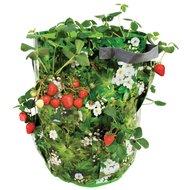 Esschert Aardbeien/kruiden Kweekzak