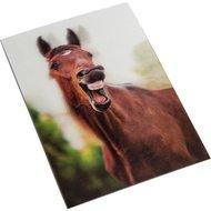 Hkm Postkaart Geeuwen 3d