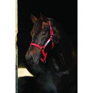Horseware Field Safe Halster Red