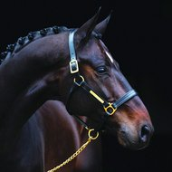 Amigo Leather Headcollar Black