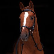Rambo Micklem Competition Bridle Zwart