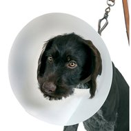 Hondenkap