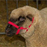 Kerbl Kopfhalfter für Schafe, Rot 20mm