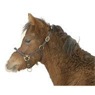 Kerbl Foal Halter Eco Leather Brown