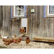 Kerbl Automatische Hühnertür Set