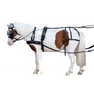 Pfiff Mentuig Berta 1 Paard Bruin Shett
