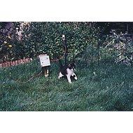 Horizont Konijn/kattennet Groen 25m 50cm