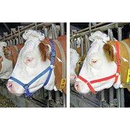 Koehalster Nylon Dubbel Verstelbaar