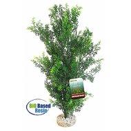 Sydeco Bio Aqua Giant Bush Groen 46cm