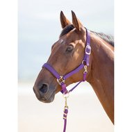 Shires Halster Topaz Nylon Paars-dubbel2