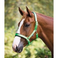 Shires Headcollar Deluxe Padded Green