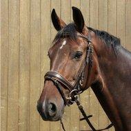 Rider Pro Hoofdstel London Deluxe Donkerbruin Pony