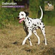 Magnetsteel Kalender 2017 Dalmatier Traditioneel 30x30cm