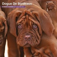 Magnet&steel Kalender 2017 Bordeaux Dog Traditioneel 30x30cm