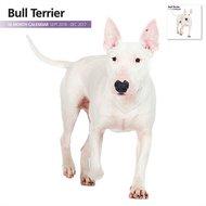 Magnetsteel Kalender 2017 Bull Terrier Modern 30x30cm