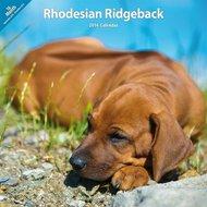 Over Dieren Kalender Rhodesian Ridgeback Traditional