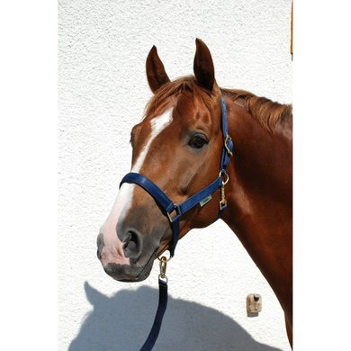 Bucas Halter Dublin Foal Navy Foal