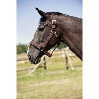 Norton Halster voor Trekpaard Zwart X Full