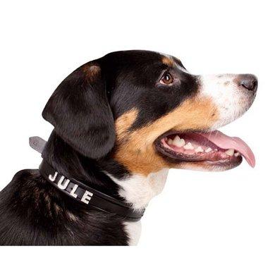 HKM Hondenhalsband voor Sierletters Zwart