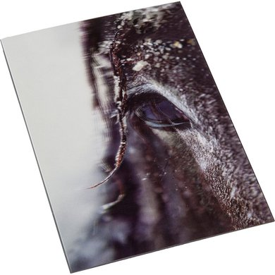 Hkm Postkaart Paarden Impressions 3d