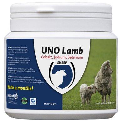 Agradi Uno Lamb