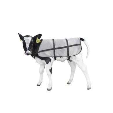 Bodyguard Calf Summer Blanket