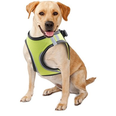 Doggy Safety Harness Simpel A:32-37cm B:42-46cm