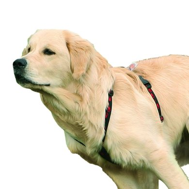 Agradi Tuig Hond Feltmann Zwart 75-100cm