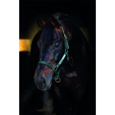 Horseware Field Safe Halster Green