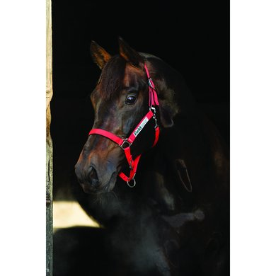 Horseware Field Safe Headcollar Red