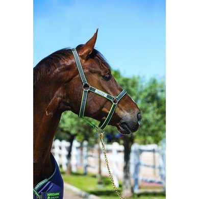 Amigo Headcollar Excal / Green