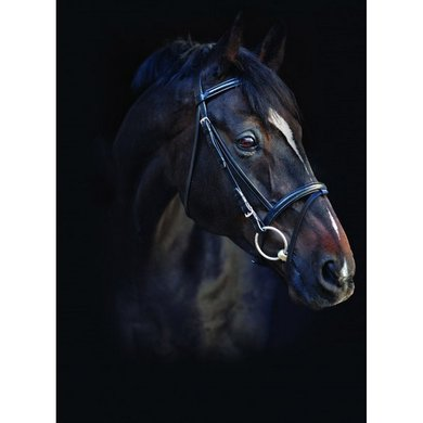 Amigo Leather Bridle Black