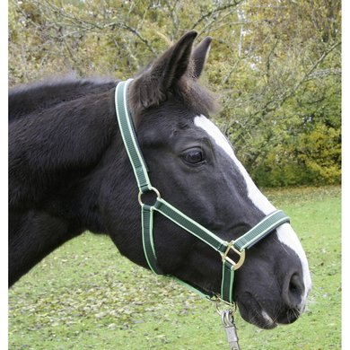 EuroHorse Halster Groen Pony-1