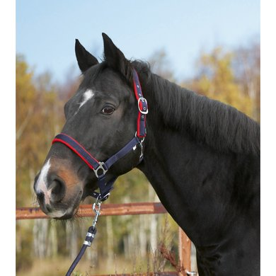 Covalliero Head Collar Dexter Fleece Lining Blue