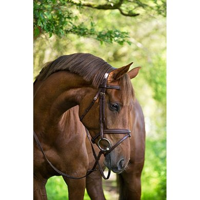 Kerbl Bridle Classic Classic Classic Brown