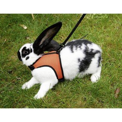 Kerbl SPORT Kaninchengeschirr mit flexibler Leine 120cm